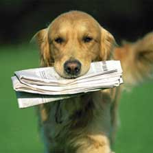 Dog Retrieving Newspaper